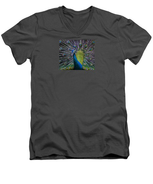 Portrait Of A Peacock Men's V-Neck T-Shirt by Venetia Featherstone-Witty