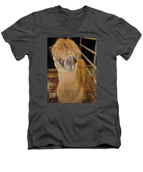 Portrait Of An Alpaca Men's V-Neck T-Shirt by Connie Fox