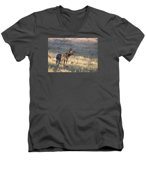 Men's V-Neck T-Shirt featuring the photograph Pregnant African Wild Dog by Liz Leyden