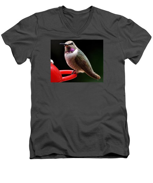Men's V-Neck T-Shirt featuring the photograph Pregnant Female Caliope With Purple Throat by Jay Milo