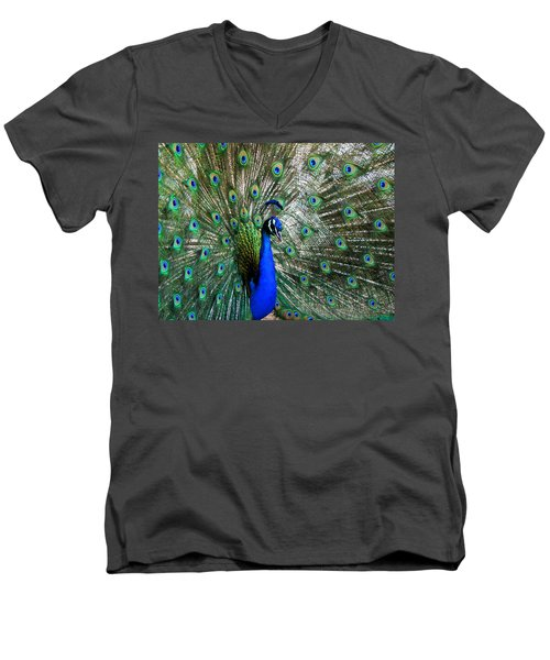 Proud Peacock Men's V-Neck T-Shirt