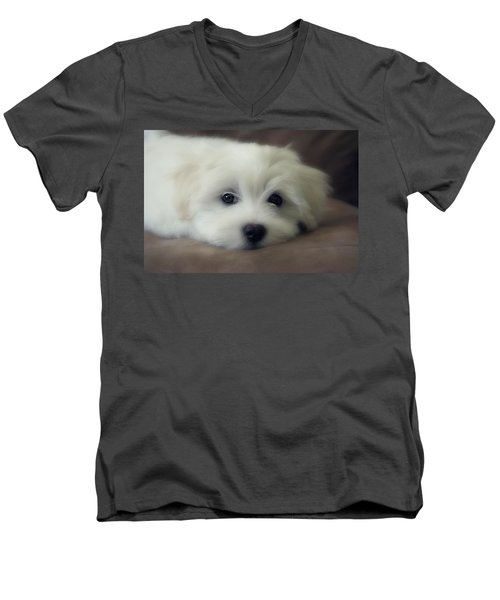 Puppy Eyes Men's V-Neck T-Shirt