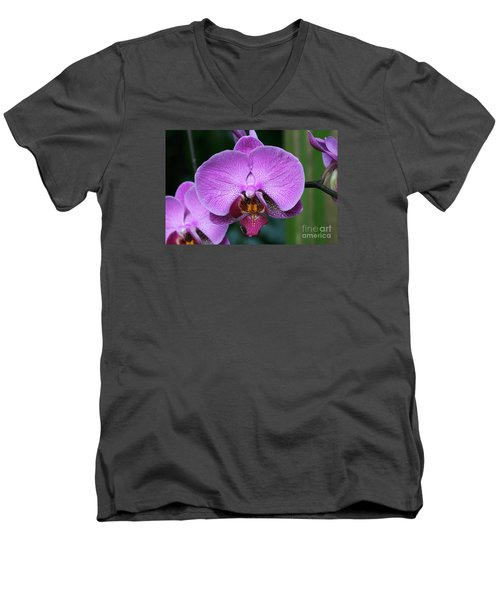 Purple Phalaenopsis Orchids Men's V-Neck T-Shirt