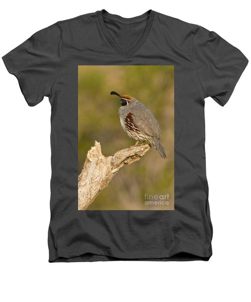 Men's V-Neck T-Shirt featuring the photograph Quail On A Stick by Bryan Keil