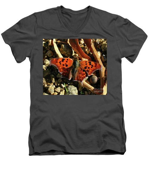 Men's V-Neck T-Shirt featuring the photograph Question Mark Butterfly by Donna Brown
