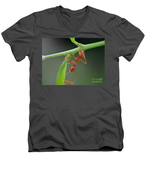Red Ant Men's V-Neck T-Shirt by Michelle Meenawong