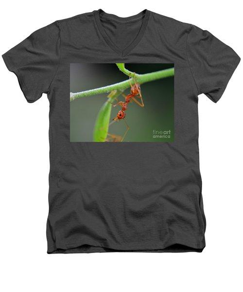 Red Ant Men's V-Neck T-Shirt