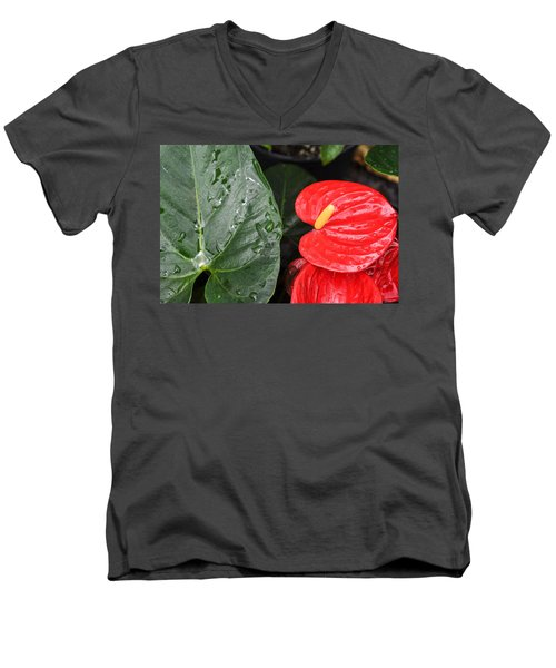 Red Anthurium Flower Men's V-Neck T-Shirt by Denise Bird