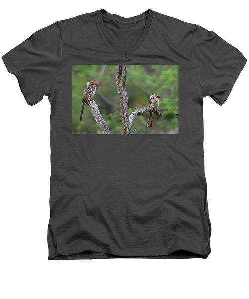 Red-billed Hornbills Men's V-Neck T-Shirt