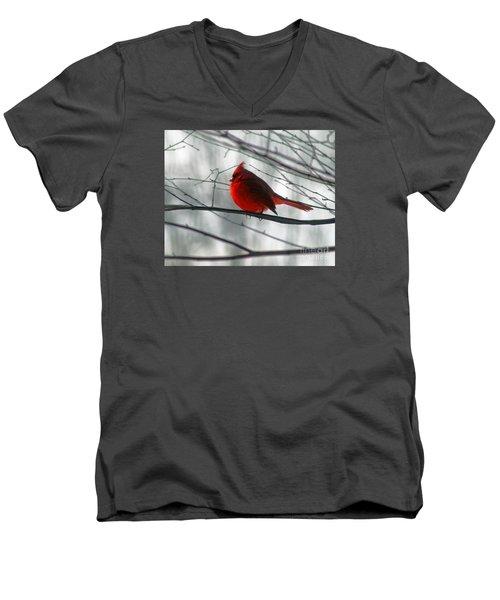 Red Cardinal On Winter Branch  Men's V-Neck T-Shirt
