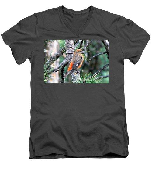 Red Crossbill On Pine Tree Men's V-Neck T-Shirt by Marilyn Burton