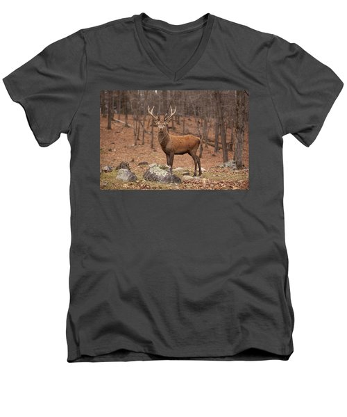 Red Deer Men's V-Neck T-Shirt