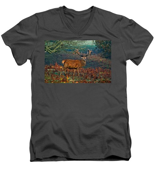 Red Deer Stag In Woodland Men's V-Neck T-Shirt