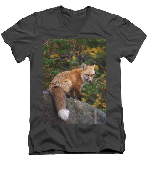 Men's V-Neck T-Shirt featuring the photograph Red Fox by James Peterson
