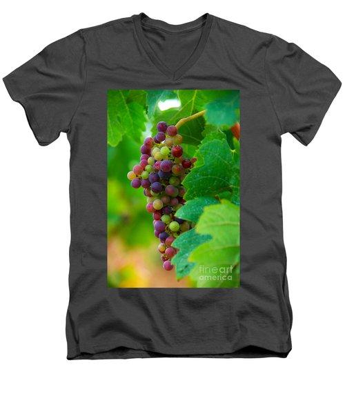 Red Grapes Men's V-Neck T-Shirt