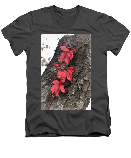 Red Leaves On Bark Men's V-Neck T-Shirt