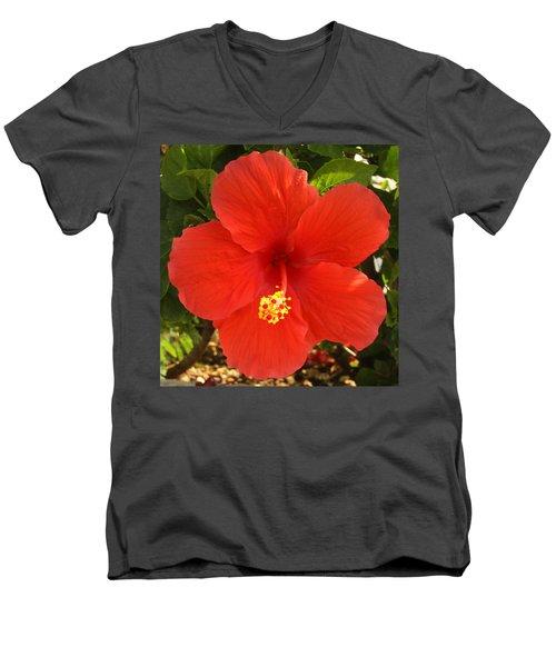 Red Pansy Men's V-Neck T-Shirt