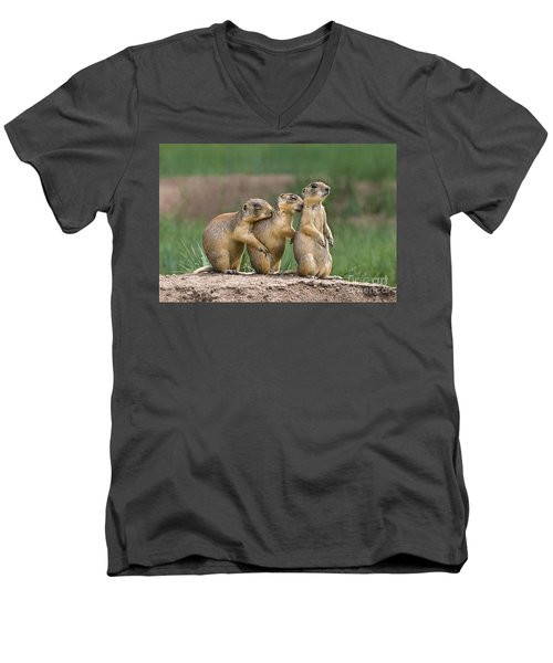 Men's V-Neck T-Shirt featuring the photograph Relaxing Utah Prairie Dogs Cynomys Parvidens Wild Utah by Dave Welling