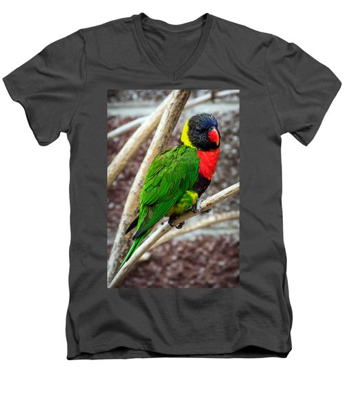 Men's V-Neck T-Shirt featuring the photograph Resting Lory by Sennie Pierson