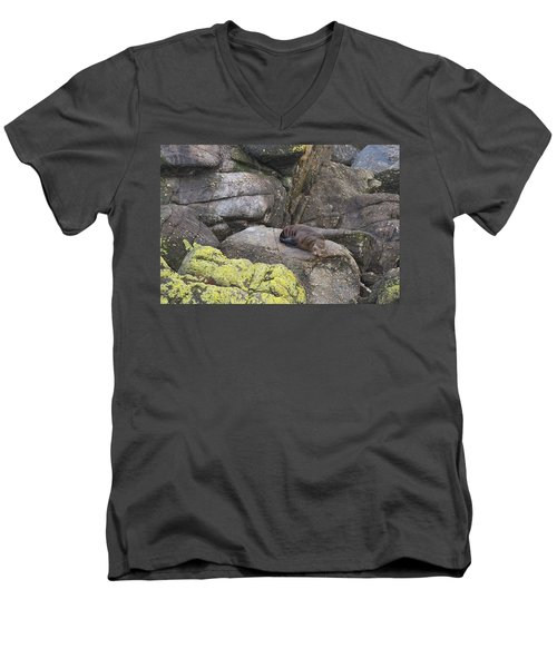 Men's V-Neck T-Shirt featuring the photograph Resting Seal by Stuart Litoff