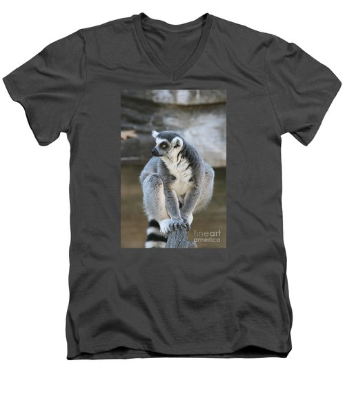 Men's V-Neck T-Shirt featuring the photograph Ring-tailed Lemur #3 by Judy Whitton