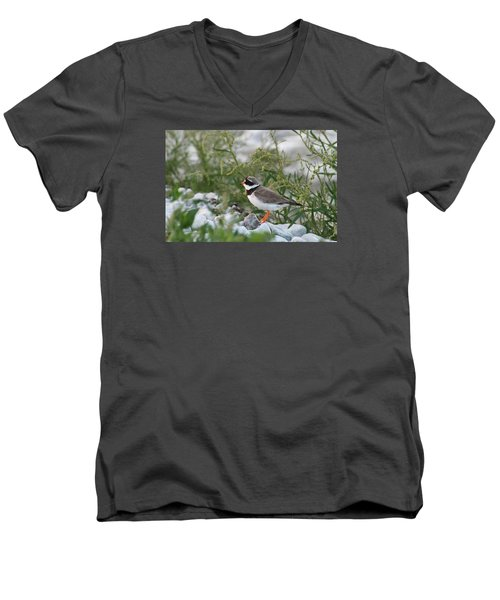 Men's V-Neck T-Shirt featuring the photograph Ringed Plover On Rocky Shore by Dreamland Media