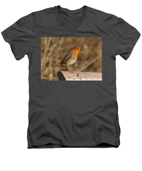 Robin On A Log -2 Men's V-Neck T-Shirt