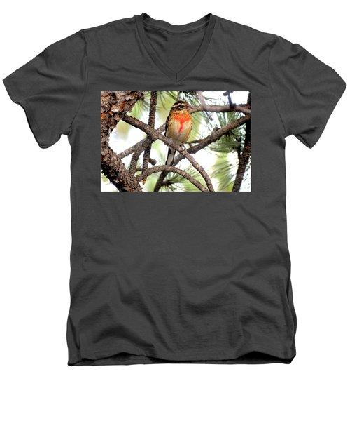 Rose-breasted Grosbeak Men's V-Neck T-Shirt by Marilyn Burton