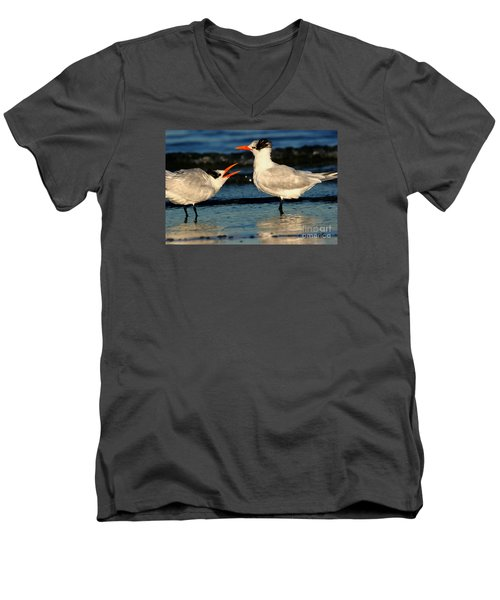 Men's V-Neck T-Shirt featuring the photograph Royal Tern Courtship Dance by John F Tsumas