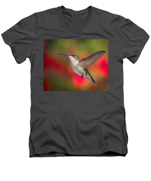 Ruby Throated Hummingbird Men's V-Neck T-Shirt