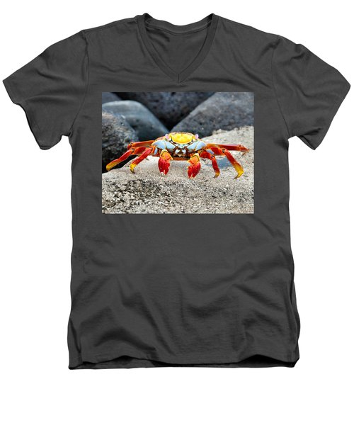 Sally Lightfoot Crab Men's V-Neck T-Shirt by William Beuther