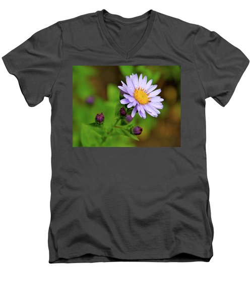Showy Aster Men's V-Neck T-Shirt by Ed  Riche