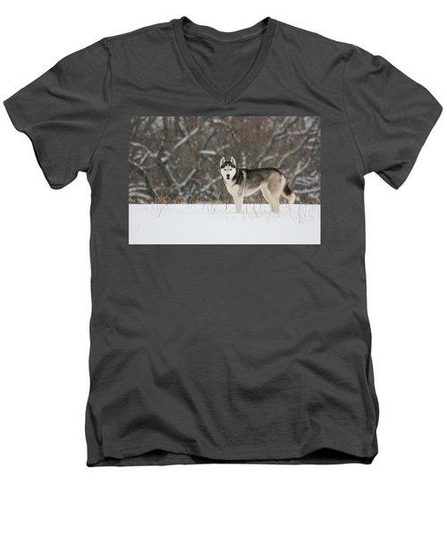 I've Been Spotted Men's V-Neck T-Shirt