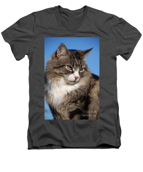 Silver Tabby Cat Men's V-Neck T-Shirt