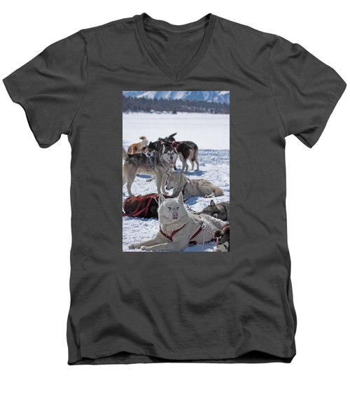 Sled Dogs Men's V-Neck T-Shirt by Duncan Selby