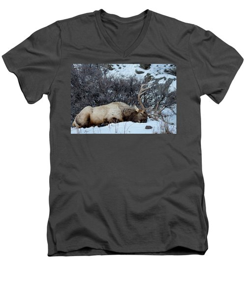 Sleeping Elk Men's V-Neck T-Shirt
