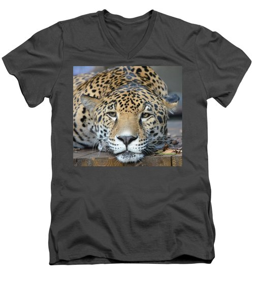 Sleepy Jaguar Men's V-Neck T-Shirt