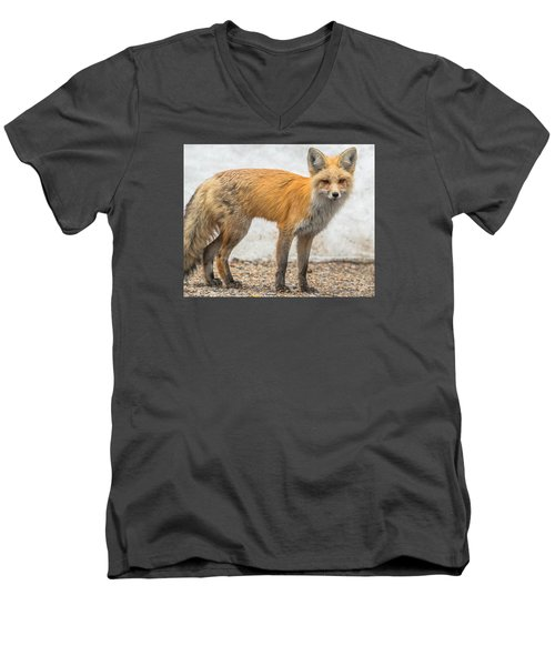 Smart Like A Fox Men's V-Neck T-Shirt by Yeates Photography
