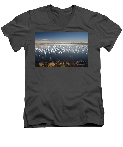 Snow Geese - Bosque Del Apache Men's V-Neck T-Shirt