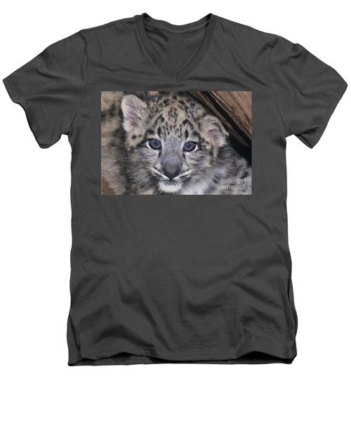 Snow Leopard Cub Endangered Men's V-Neck T-Shirt