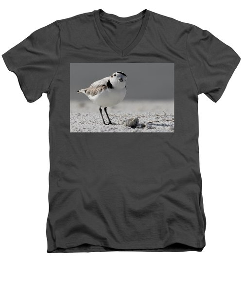 Snowy Plover Men's V-Neck T-Shirt