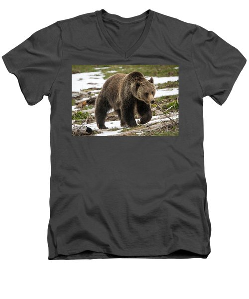 Men's V-Neck T-Shirt featuring the photograph Spring Grizzly Bear by Jack Bell