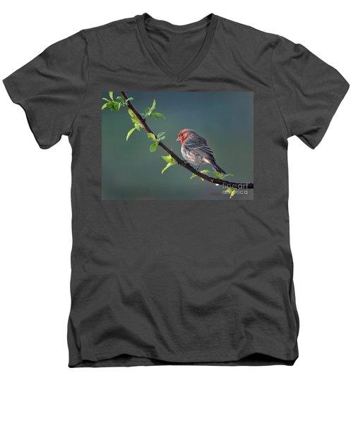 Song Bird In Spring Men's V-Neck T-Shirt