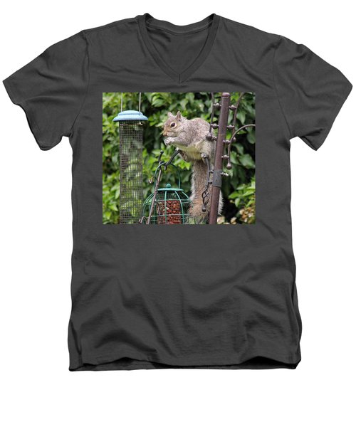 Squirrel Eating Nuts Men's V-Neck T-Shirt