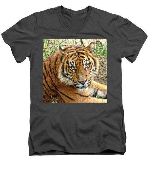 Staring Tiger Men's V-Neck T-Shirt