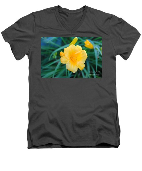 Stella De Oro Daylily Men's V-Neck T-Shirt
