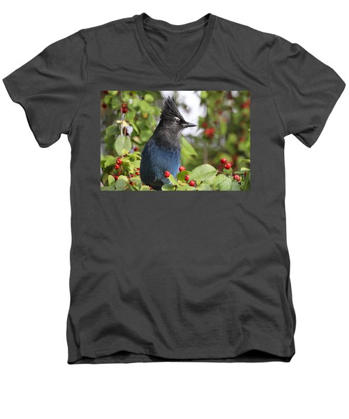 Steller's Jay And Red Berries Men's V-Neck T-Shirt