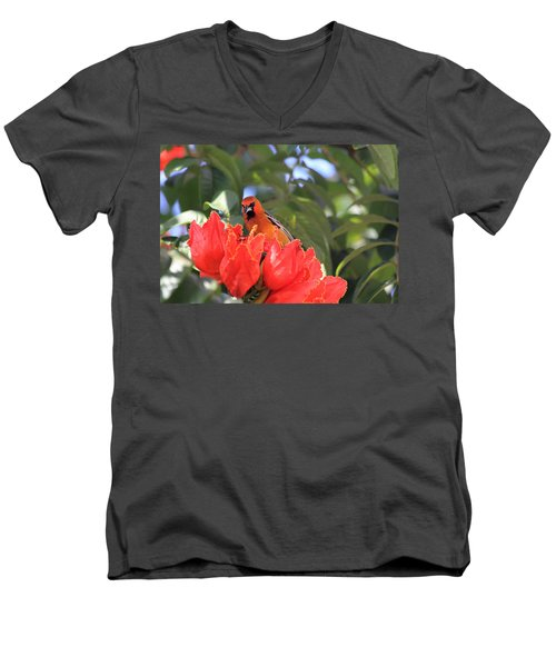 Men's V-Neck T-Shirt featuring the photograph Streak-backed Oriole by Shane Bechler