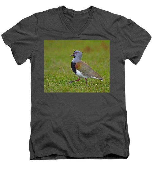 Strutting Lapwing Men's V-Neck T-Shirt by Tony Beck