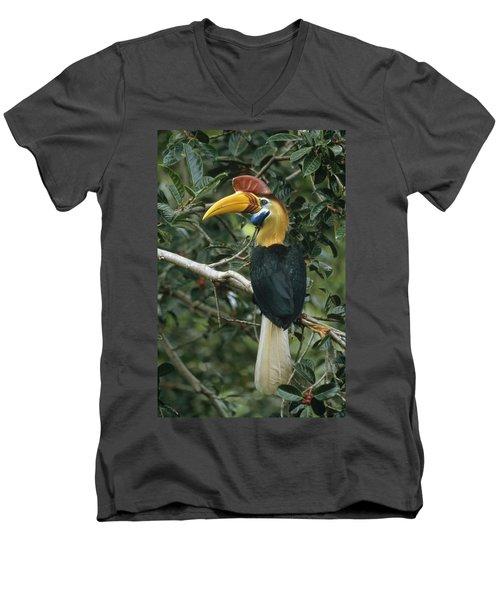 Sulawesi Red-knobbed Hornbill Male Men's V-Neck T-Shirt by Mark Jones